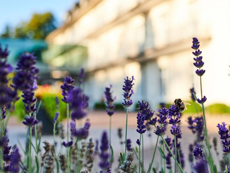 Außenbereich der Max Grundig Klinik mit Blumen